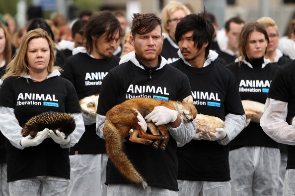 Animal Activists Hold Memorial For Dead Animals In Federation Square